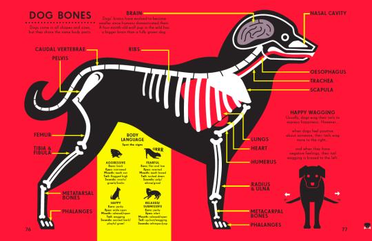 dog-bones