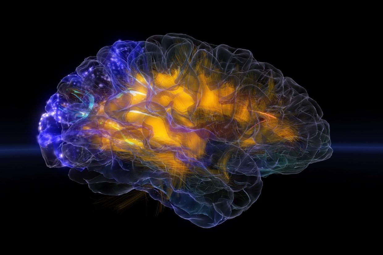 glass-brain