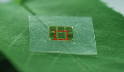 houten-chip