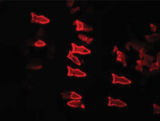 3D‐Printed Artificial Microfish