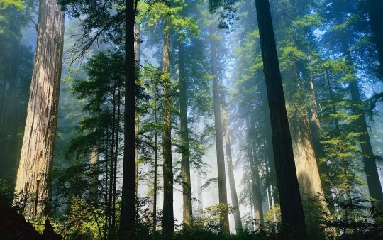 6975441-big-trees-forest