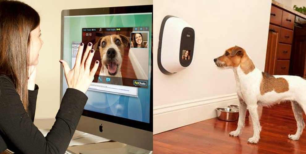 videobellen met jouw huisdier via PetChatz