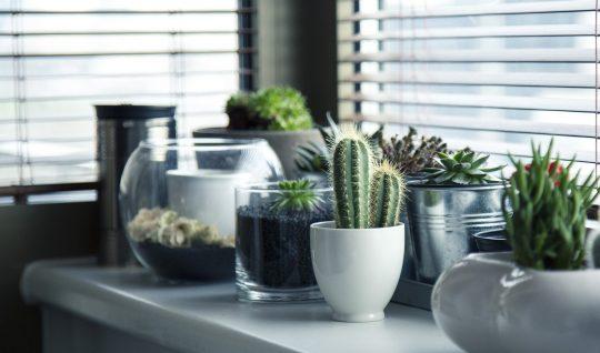 plant, planten,