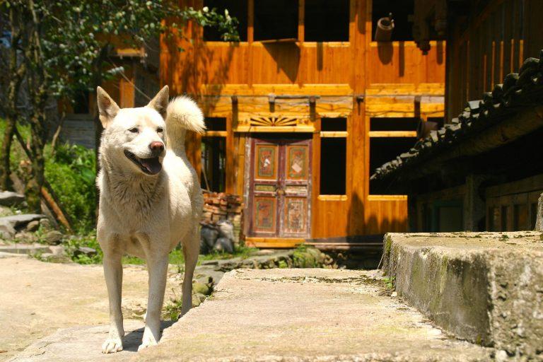 Chinese hondeneigenaren