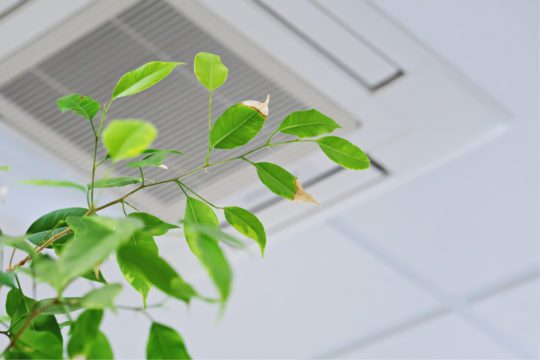 Luchtkwaliteit, groen, planten