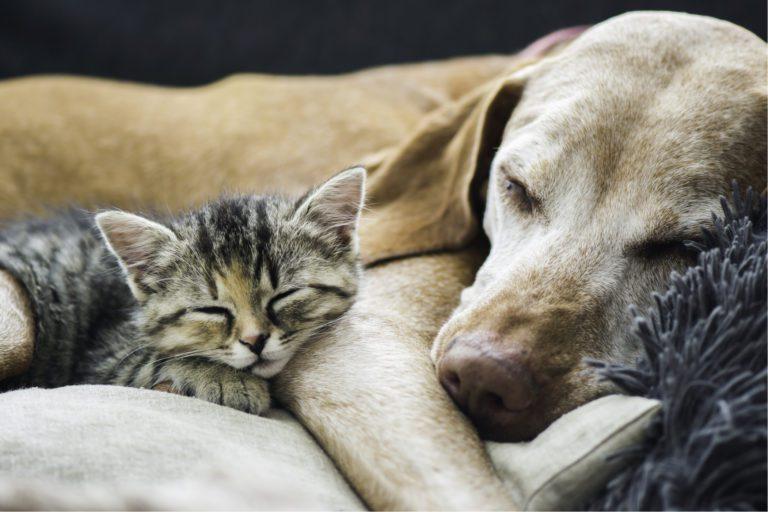 Dierendag, hond, kat